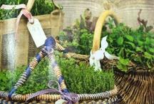 Herb Garden Ideas / by Lyn Griswold