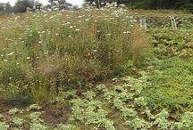 IJLA - Mosaic slopes / Landscape Architecture Landscape Design Garden Design