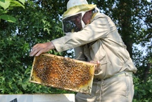 An Afternoon with our Beekeeper Roger Gares