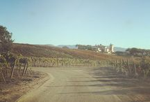 Villa Angeli Vineyard / Wineyard
