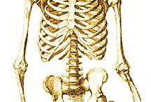 la chiropratique Sébastien Fuentes / La chiropratique traite la santé à travers le système nerveux et la colonne vertébrale. Son but est d identifier de corriger les interférences qui empêchent le corps de fonctionner à 100% de ses capacités pour permettre au patient de se libérer de ses symptôme et recouvrir un état de bien être physique et émotionnel. de la sciatique lombalgie à la gestion du stress en passant par le suivi de grossesse au sportif de haut niveau. La chiropratique chiropraxie accompagne les patients de 0 à 99 ans .