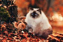 Seasons: Autumn Mofo