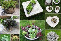 Kreative Mitbring sel aus Beton mit hübschen Herbstzauber oder schönem Hauswurz