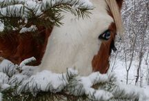 animals / by Cathy bulgarin
