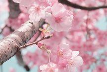 flower ❤