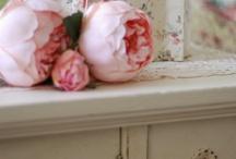 Peonies / Flowers