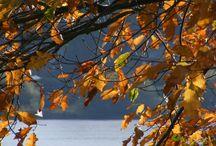 Automne Day / les feuilles d'automne