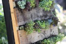 Green Thumb Gardens  / by Amanda Basa
