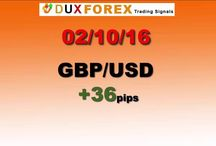 Daily Forex Profits Performance 02/10/16