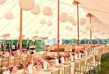 blush and gold / wedding
