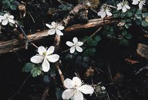 ae. | pretty things