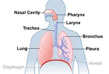 Lungs Health / This board is for any resource from reliable government and organization websites related to lung health topics, such as asthma, Chronic obstructive pulmonary disease (COPD), and Cystic Fibrosis. / by NLM_4Caregivers