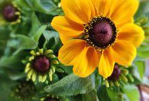 Flower Power Blumen / Was blüht