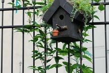 ogród i ptasie ogrody