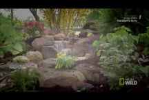 Pond Stars as featured on NAT Geo Wild #CertifiedAquascapeContractors #PondStars #PondsInc / Ponds Inc. of Illinois claims no rights to these videos and is only sharing these videos found on YouTube located on the Pond Stars channel. Entertainment only.