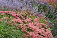Garden & flowers & tress
