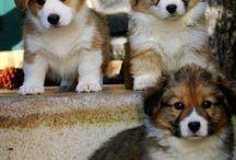 Σκυλάκια <3
