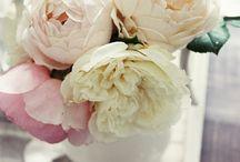 Wedding / by Sandi Larsen
