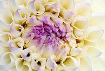 Natuur - bloemen e.d.