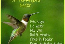 Humming bird nector