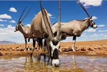 Namibia Tour Operator / Plan Your Trip to Namibia