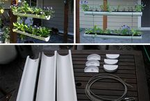 ideas de plantas colgantes