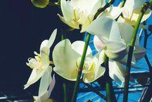 Le nostre orchidee / Di ogni colore e dimensione. Cerca quella più adatta a te su www.florpagano.com #Florpagano #orchidee #orchids