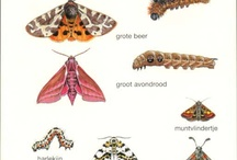 Thema Vlinders