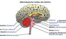 Anatomie 1,2,3