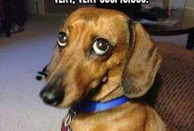 Koirahömppää