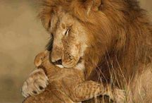 Animal world.Hugs