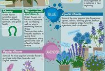 Kvety - všeličo