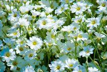 цветы-птицы