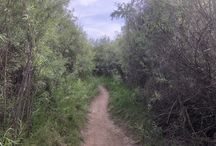Hiking San Diego (& Beyond)