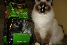 World's Best Cat Litter Reviews