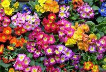 Esila guzel kokulu çiçeklerle 223