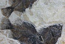 Fosile