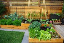 Backyard Gardening and Patios / by Rebecca Schley Brinton