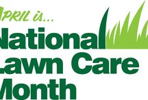 Blog / Check out our blog for information on best practices for your lawn.
