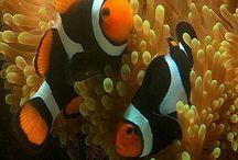 Animais Marítimos