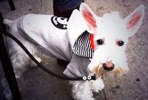 * Cute Doggies * / #dogs #cute #sweety #love