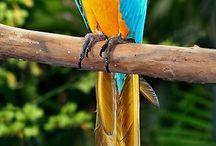Oiseaux 1 / Perroquets
