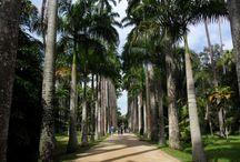 Jardim Botanico RJ