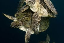 Tortugas / by Leticia Schinestsck