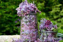 herbatka z kwiatka