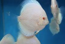 akuarium