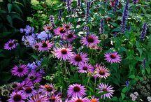 Kukkaset-puutarha
