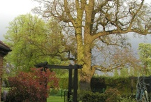 A view with English oak / Despite gradual changes and remodelling of the garden, this 250 year old oak continues its very welcome domination of the South Lodge landscape