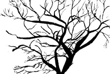 walltree