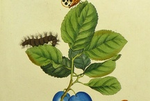 images botaniques